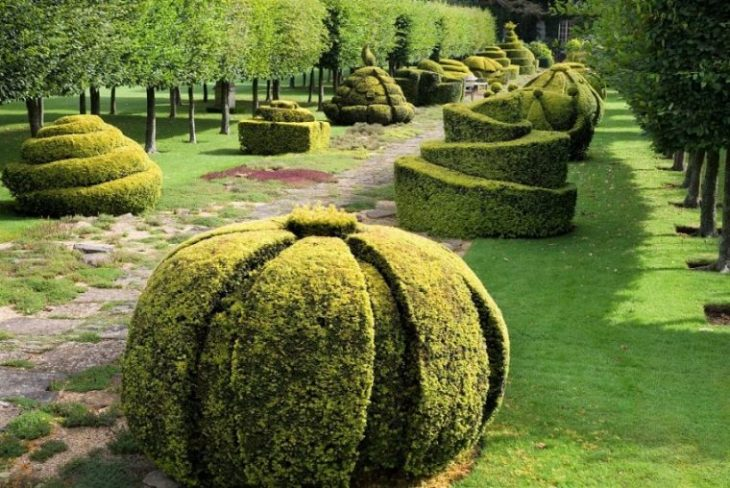 The Thyme Walk with Golden Yew Topiary, Highgrove Garden