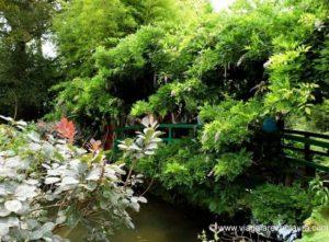 normandia giardino monet ponte giapponese