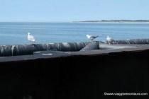Sulla barriera, alla foce dello Schelda