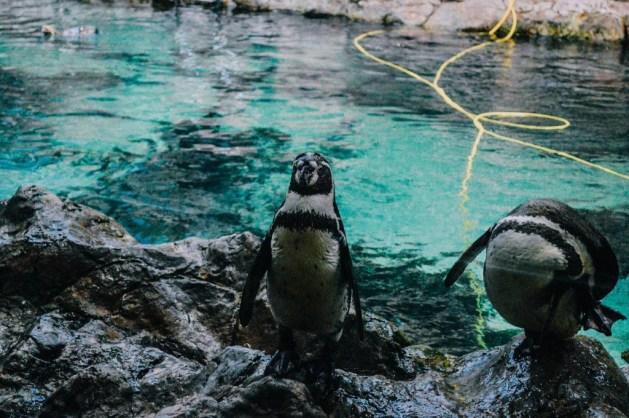 Loro Parque (pinguini)