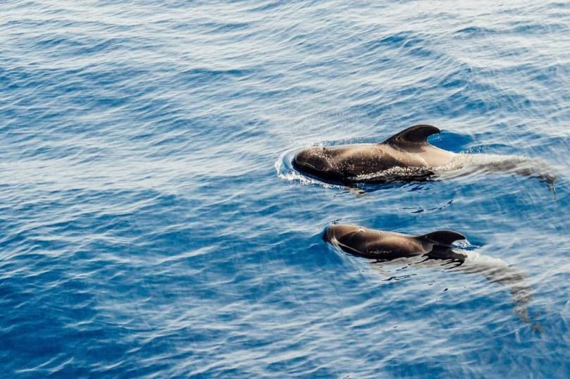 Balene a Tenerife