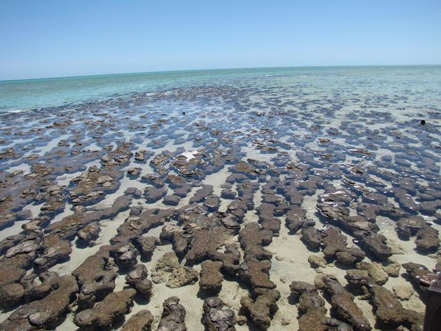 Australia - Fra scogliere e deserti - Hamelin Pool - Stromatoliti
