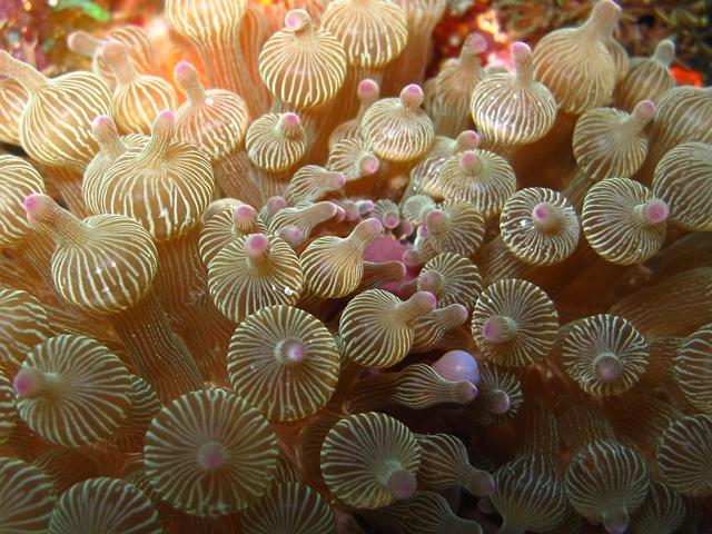 Indonesia Flores Island Alor
