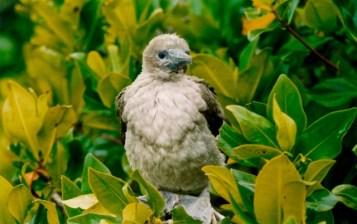 Ecuador - Galapagos - Isla Genovesa