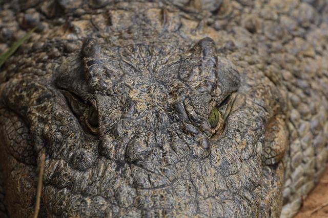 Madagascar coccodrilli