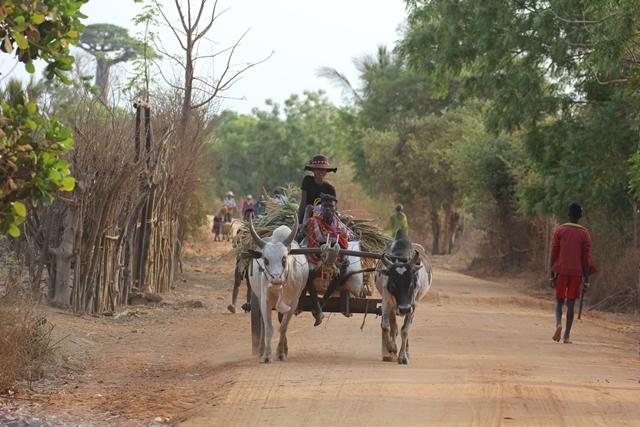 Madagascar parchi tribù
