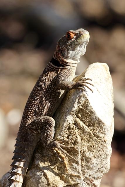 Madagascar Parco Nazionale degli Tsingy di Bemaraha National Park