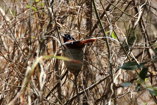 Isalo Madagascar parchi