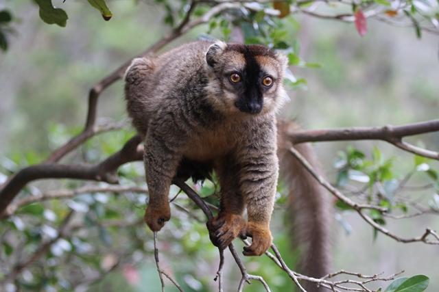 Madagascar parchi lemuri