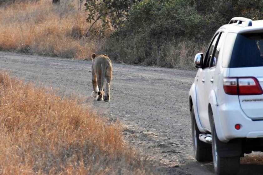 sudafrica-leoni-kruger