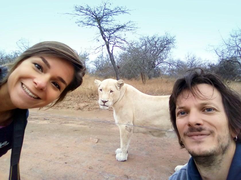 camminare-con-i-leoni-esperienza-da-paura