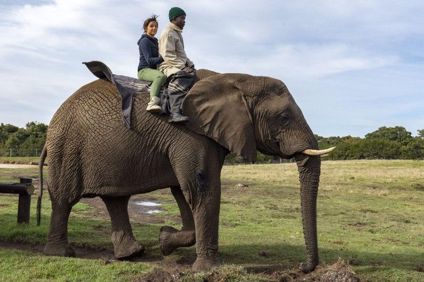 passeggiata-sull'elefante