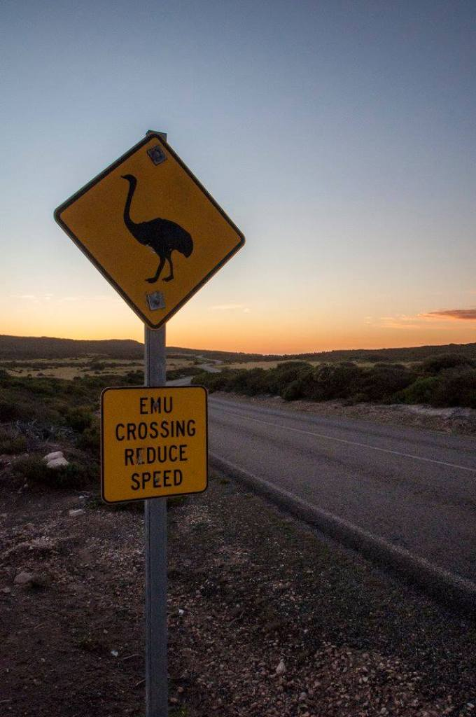 Kangaroo Island Viaggiatori per Caso wildlife