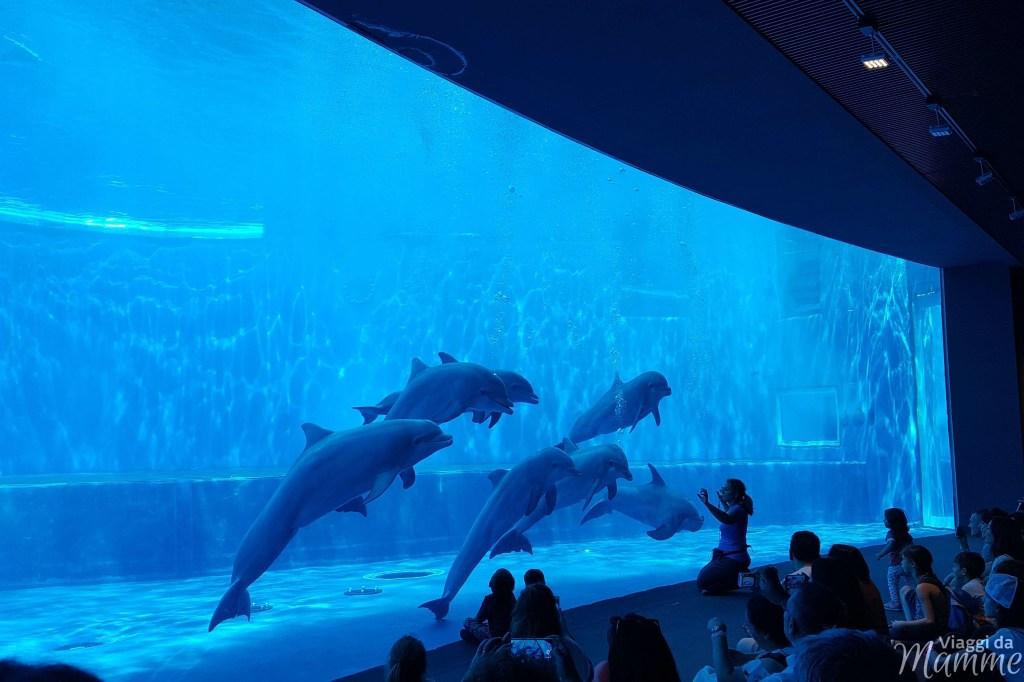 Visitare l'Acquario di Genova con i bambini -esibizione dei delfini al piano inferiore-