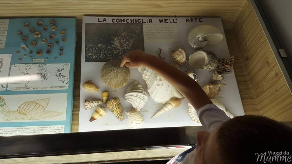 Vacanza a Bellaria Igea Marina: cosa fare coi bambini -Museo delle conchiglie-