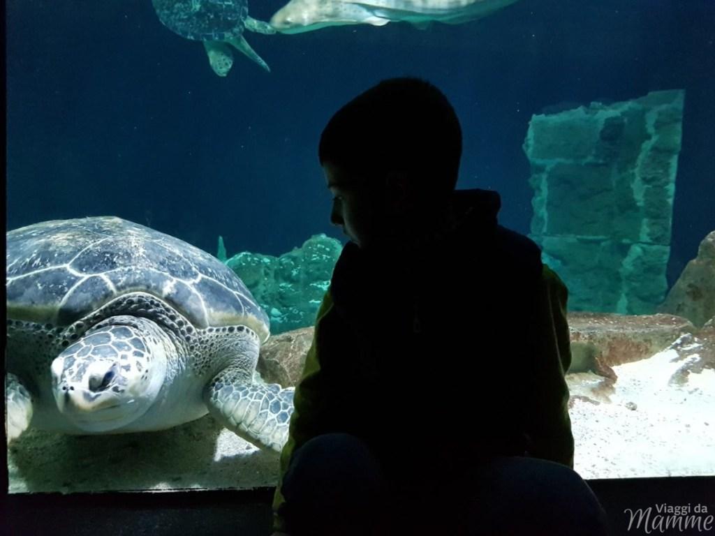 Le tartarughe verdi Ari e Cuba - Acquario di Livorno