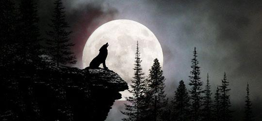 I licantropi e il richiamo della luna piena