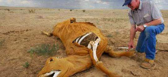 Mutilazioni animali: alieni o cause terrestri?