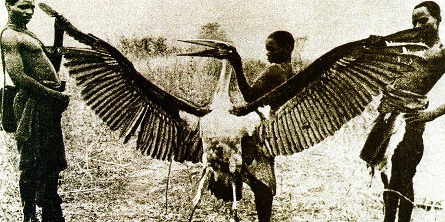Kongamato: pterodattili nelle paludi africane?