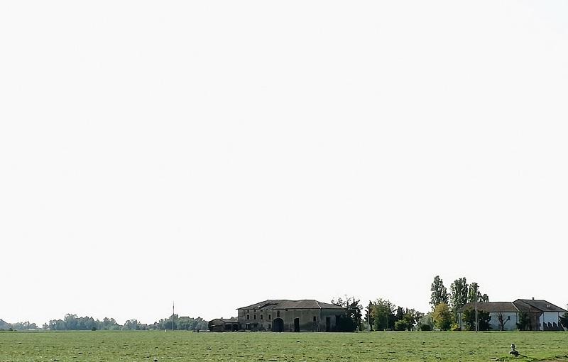 azienda novelli parmigiano vacche rosse