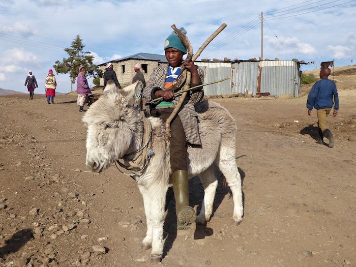 pastore basotho