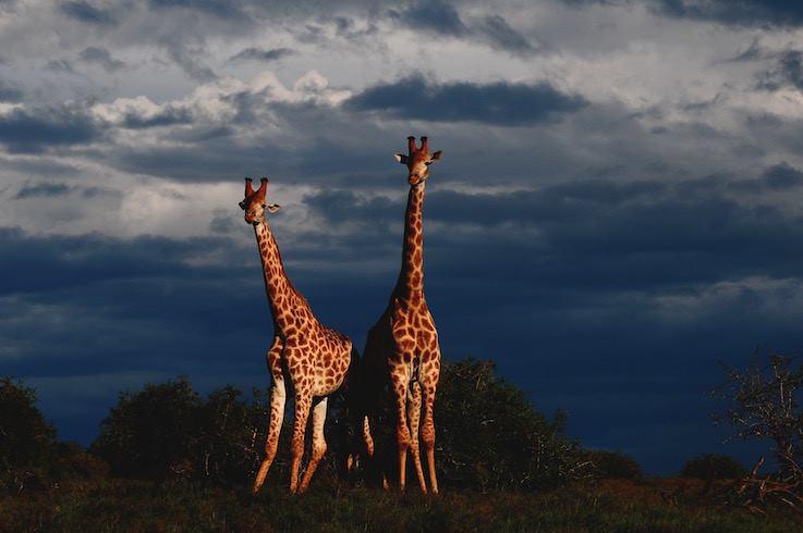 turismo responsabile in africa