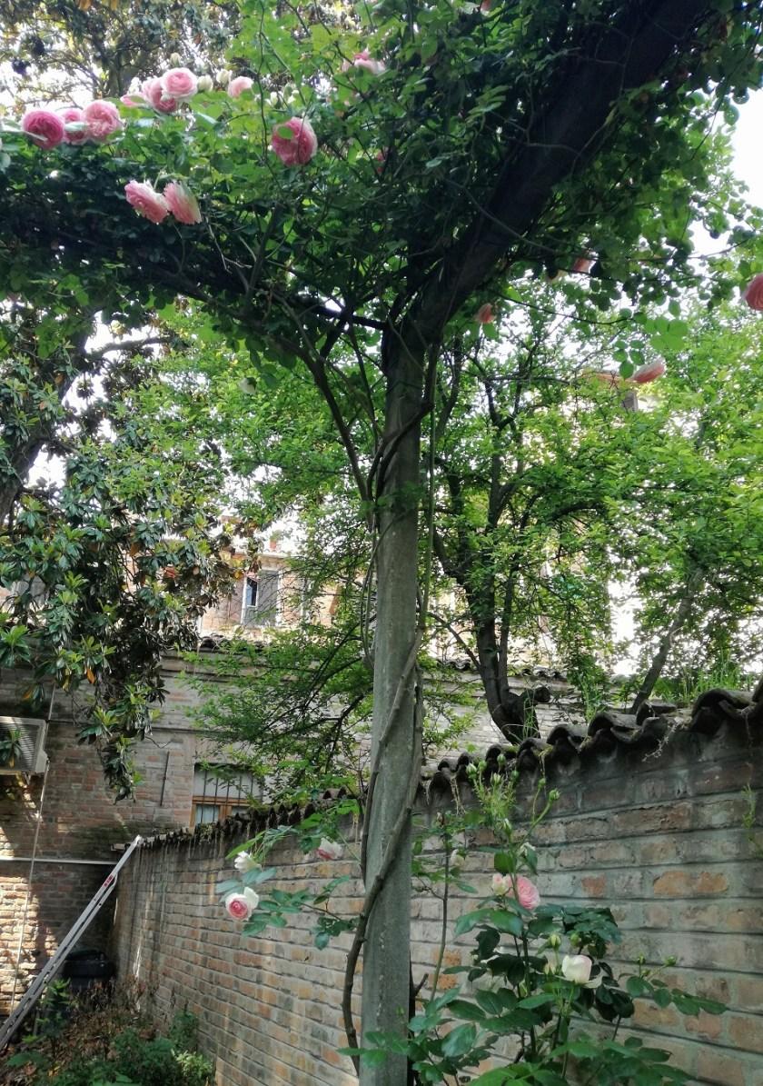 giardini-privati-roseto