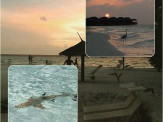 Isole delle maldive: quali scegliere