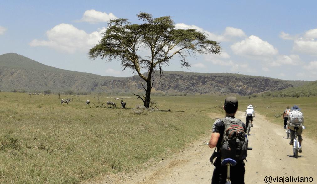 Zebras descansando bajo la sombra de un árbol en Hell's Gate