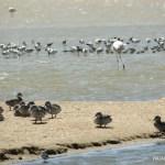 Lagoon (reserva de pájaros) en Walvis Bay