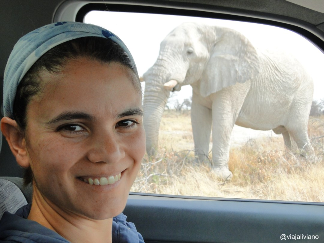 Elefante blanco Etosha National Park