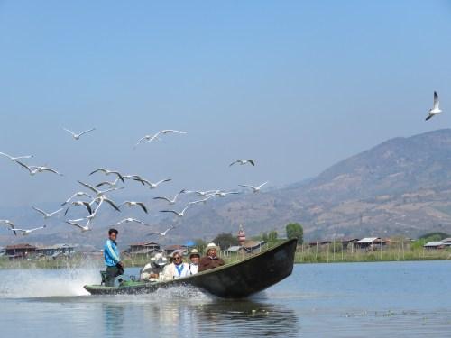 Gaviotas en el Lago Inle