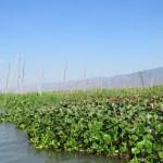 Cultivos flotantes