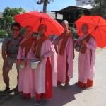 Monjas recolectando el arroz de la tarde