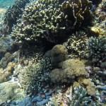 Arrecifes coralinos, similares a los que tenemos en el caribe