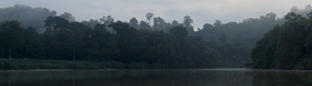 Consejos Kinabatangan Borneo Malasia
