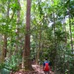 Caminata en Manukan