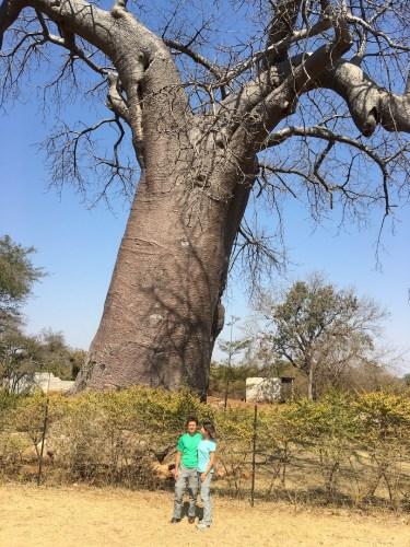 Nuestro primer baobab rumbo al parque