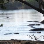 ¡Hipopótamos! desde el campamento podíamos escucharlos en la noche