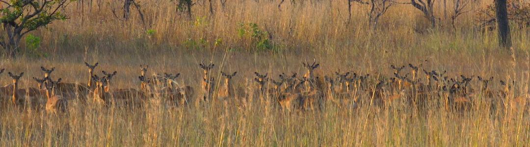 Safari Kafue Zambia