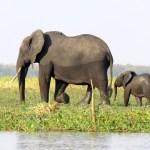 Familia de elefantes caminando al lado del río