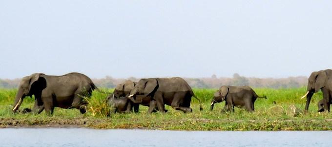 Safari Liwonde Malaui