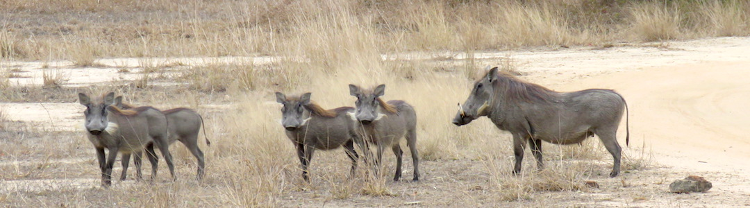 Safari parque Gorongosa Mozambique