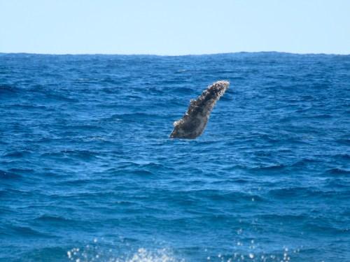 Desde la playa podíamos ver a las ballenas