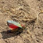 Insecto venenoso