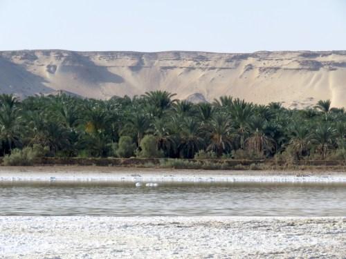 Oasis Bahareya en el desierto del Sahara, Egipto. Dunas, árboles de dátiles y el lago salado en un solo lugar