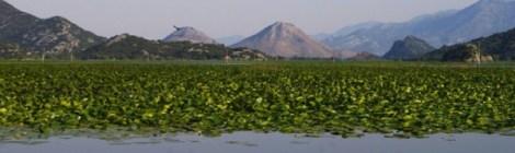 Lago Skadar. Montenegro