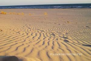 Doñana, rutas, senderismo, centros de interpretación, rocina el rocio, huelva, andalucia, dunas, dunas fijas, dunas moviles