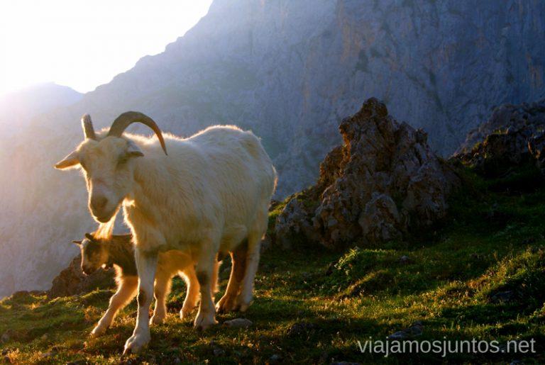 Felicidad en estado puro Asturias, que hacer, donde ir; montaña, playa, pueblos con encanto