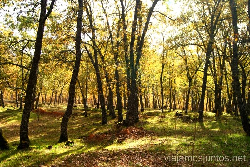 El bosque otoñal Descubriendo el Edén de la Mancha, el parque natural del Valle de Alcudia y Sierra Madrona